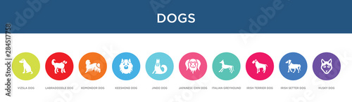 Tablou Canvas dogs concept 10 colorful icons