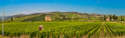 Fotografiet vineyard with ripe grapes in Greve in Chianti