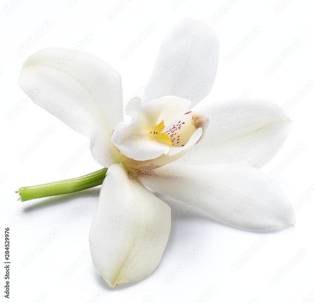 Fototapety, obrazy: Vanilla orchid vanilla flower isolated on white background.