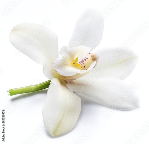 Cadres-photo bureau Fleuriste Vanilla orchid vanilla flower isolated on white background.