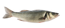 Sea Bass Fish Isolated Without Shadow
