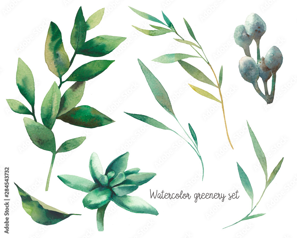 Fototapety, obrazy: Watercolor greenery set. Hand drawn elements of design: green leaves; branches; succulent. Greeting or wedding clip art.