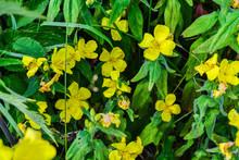 Beautiful Bright Yellow Wildfl...