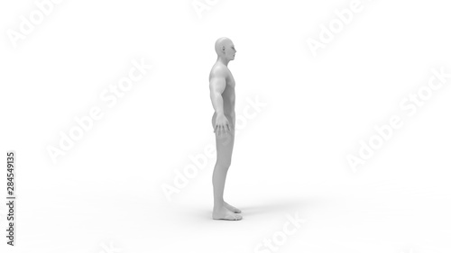 Fotografie, Obraz  Human body 3d rendering of a human body isolated in white background