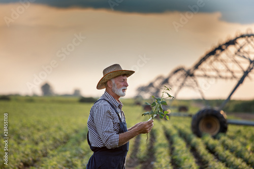 Fototapeta Farmer in front of irrigation system in field