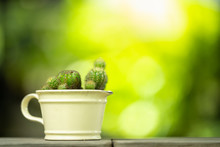 Closeup View Of Cactus In Pot ...