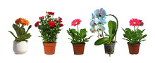 Flower Plants In Pots Isolated...