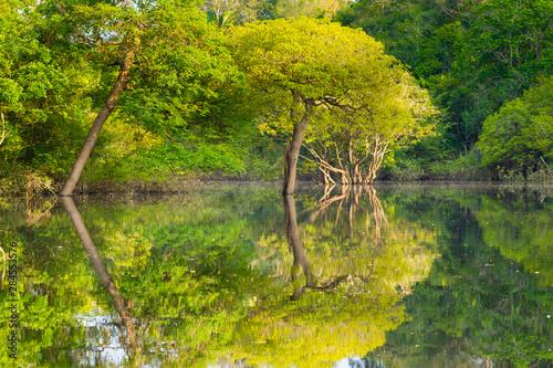 Panorama from Amazon rainforest, Brazilian wetland region. Slika na platnu
