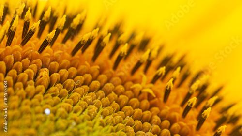 In de dag Zonnebloem The spiral part of the center of a sunflower flower close-up