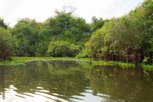 Panorama from Pantanal, Brazilian wetland region. Slika na platnu