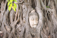 Famous Head Of Buddha Looking Out Of The Interlacing Of Tree Roots At Wat Mahathat, Ayutthaya City - UNESCO World Heritage Site. One Of The Symbols Of Thailand And Its Ancient Culture.