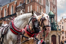 View Of The Wonderful Horses In The Town Center.Horse-drawn Cart On The Main Square Of The Historic City.Carriage For Tourists On The Background Of A Historic Church.Cracow, Poland.