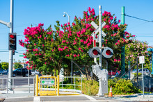 The Commuter Train Tracks On Unguarded Pedestrian Street Level Grade Railroad Crossings With Blooming Myrtle Tree Background
