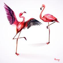 Illustration Of Two Flamingo. ...