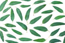 Flat Lay , Eucalyptus Leaves Isolated On White Background.