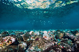 Fototapeta  - Underwater scene with stones, copy space. Clear tropical ocean