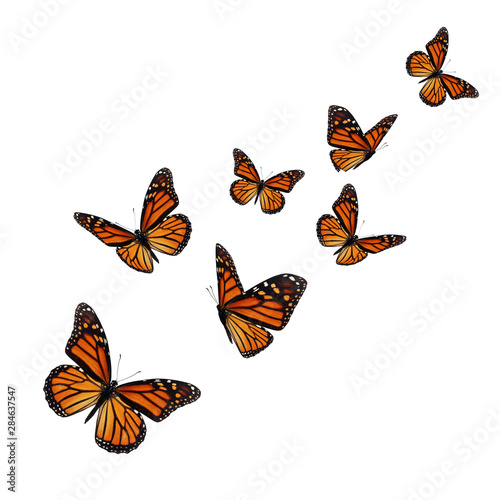Beautiful monarch butterfly - 284637547