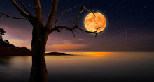 Tree That Catches The Moon Bet...