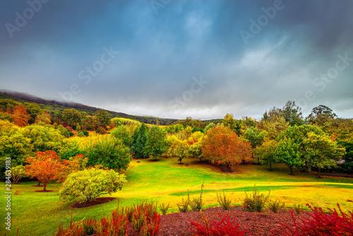 dramatyczna-scena-jesienna-w-adelaide-hills
