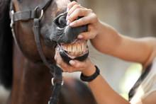 Veterinarian Examining Horse Teeth On Farm, Closeup