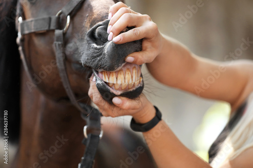 Veterinarian examining horse teeth on farm, closeup