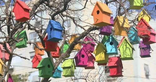 Photo  Many bird houses are swing on a dry tree at wind