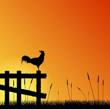 Rooster On The Fence At Sunset...