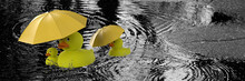 Yellow Rubber Duck Family With...