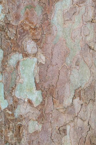 Deurstickers Oude vuile getextureerde muur Closeup Tree Bark Texture Background