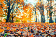 Autumn Landscape - Yellowed Tr...