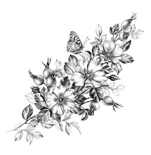 Hand Drawn Butterfly And  Dog Rose Flowers Bunch