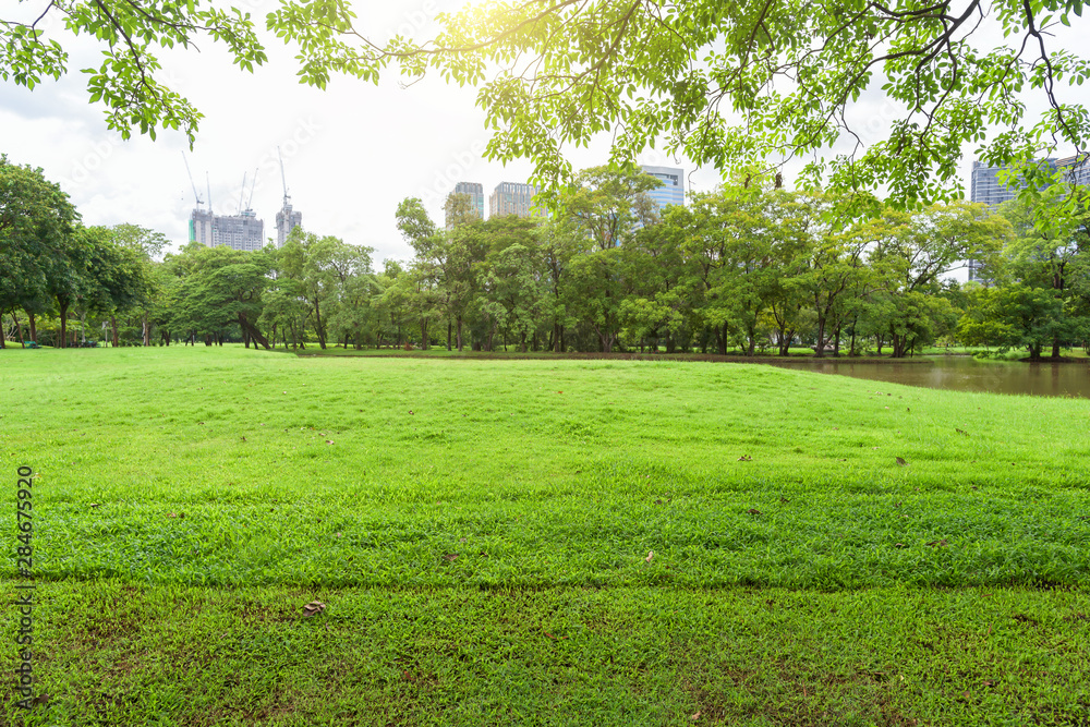 Fototapety, obrazy: Beautiful landscape in park with tree and green grass field at morning.