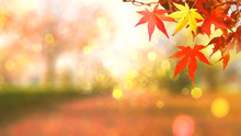 Web Banner Design For Autumn Season And End Year Activity With Red And Yellow Leaves With Soft Focus Light And Bokeh Background