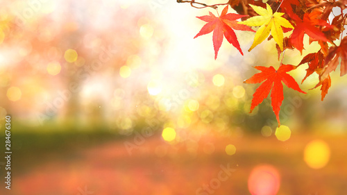 Obraz web banner design for autumn season and end year activity with red and yellow leaves with soft focus light and bokeh background - fototapety do salonu