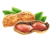 Watercolor Peanut Nut Food Iso...