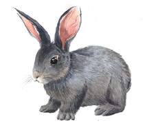 Watercolor Single Rabbit Anima...