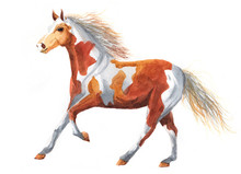 Watercolor Single Horse Animal Isolated On A White Background Illustration.