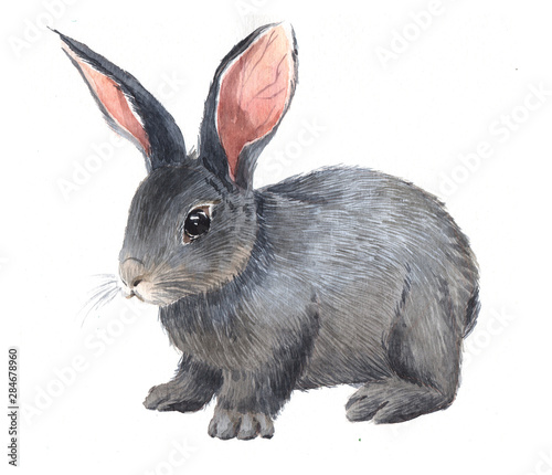Photographie Watercolor single rabbit animal isolated on a white background illustration
