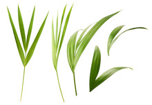 Beautiful Fresh Green Palm Leaves Isolated On White