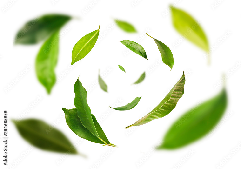Fototapeta Vividly flying in the air green tea leaves isolated on white background 3d illustration. Food levitation concept