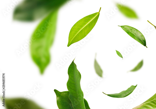 Vividly flying in the air green tea leaves isolated on white background 3d illustration. Food levitation concept