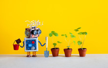 Automation Robotic Gardening Concept. Robot Gardener With A Bucket And A Shovel Looks At The Fresh Sprouts Of Wild Strawberries In Clay Flower Pots. Yellow Background.