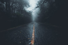 The Road Into The Forest In Th...