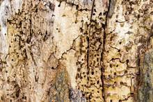 Rotten Tree Stump Surface, Abs...