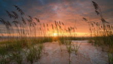 Beautiful Sea Oats On A Florid...