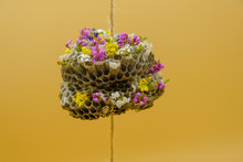 Empty Honeycombs Of Wild Wasps Are Decorated With Small Flowers On A Yellow Surface. Unexpected Concept. Green House Concept. Happy Home Concept. Family Concept. Copy Space. Close Up.