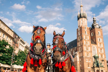 Two Decorated Horses For Riding Tourists In A Carriage