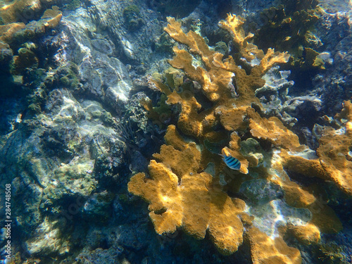 An underwater photo of a beautifully patterned Elkhorn coral. Canvas Print