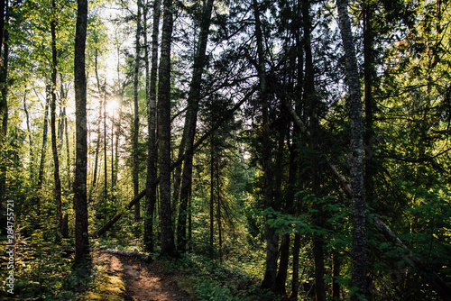 Evening hike in the forest