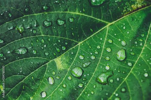 Fotografía  水滴のついた葉っぱ